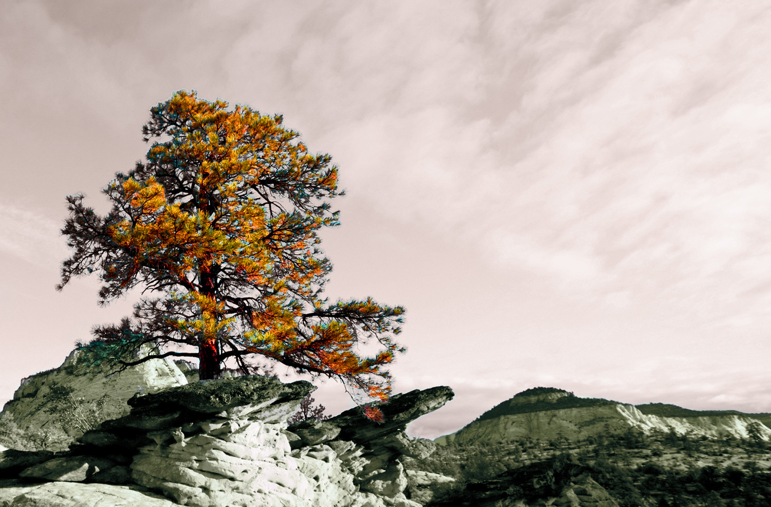 Photograph of a tree flourishing in the harsh climate of Zion's National Park, Utah.